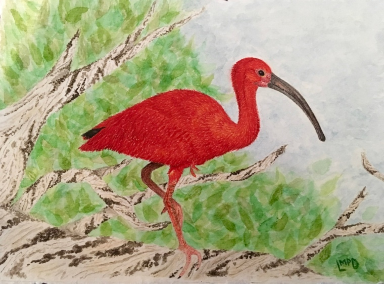 Birds of Suriname: Scarlet Ibis
