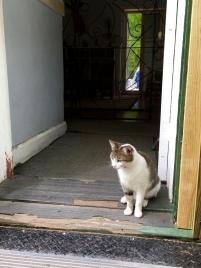 Cat standing guard over Hemingway's writing room.